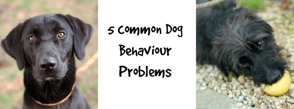 FBnote5commondogbehaviourproblems