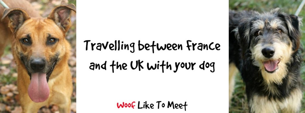 travelling-dogs